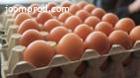 Prodajem konzumna jaja